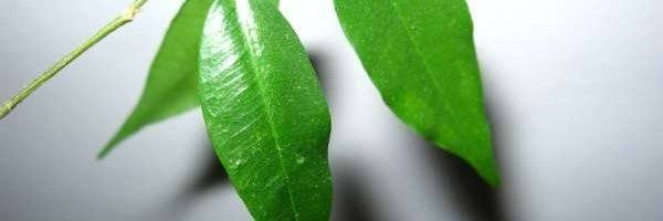 zielony_listek